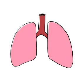 健康な肺のイメージ