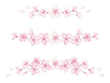 水彩で描いた桜のラインセット