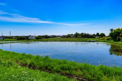 田園風景 米作り 稲作 田舎 【 初夏の田植えが終わった水田 】