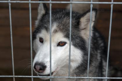 Sad dog locked in the cage