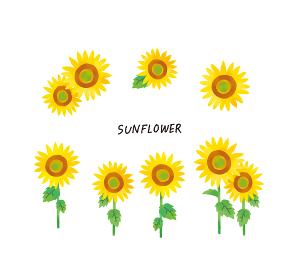 カジュアルなタッチ 水彩タッチの向日葵のイラストセット