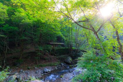 奥秩父の山奥の渓流