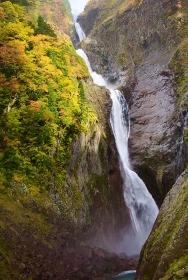 秋・紅葉の称名滝