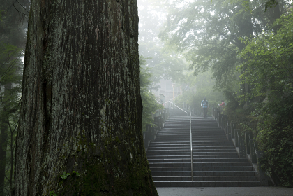 霧の出ている東京御岳山の登山道と大きな木