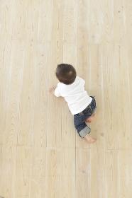 フローリングの床をハイハイする赤ちゃんの合成用素材