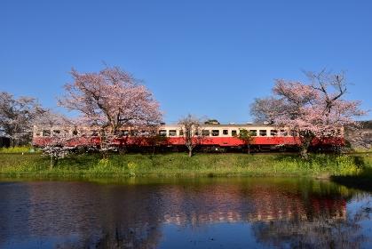 千葉県 春 小湊鉄道 飯給駅 桜