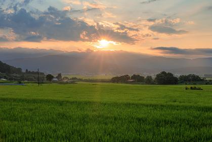 長野県・木島平村 緑の水田と夕日の風景
