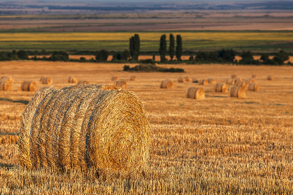 Agricultural landscape - Field with bales of hay at sunset