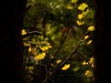 武蔵野の雑木林の風景 11月