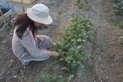家庭菜園で作業する女性
