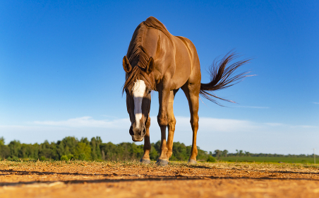Beautiful Chestnut Brown Horse In Pasture
