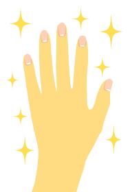 手が綺麗でキラキラ輝いているイメージのイラスト