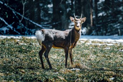野生に生きる小鹿