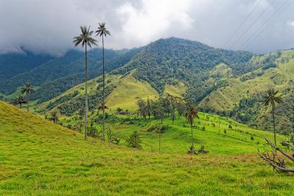 cocora valley,quindio,colombia