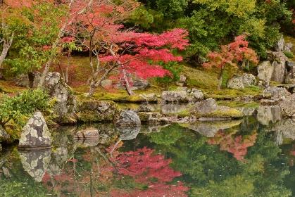 秋の京都 嵐山 天龍寺の紅葉
