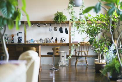 観葉植物のあるおしゃれな空間