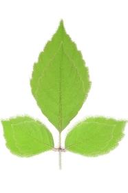 緑の葉のイメージ合成