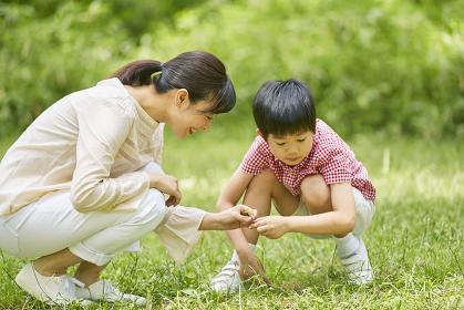 四つ葉のクローバーを探す母親と息子