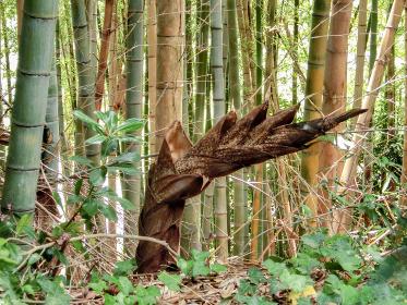 竹林の曲がった筍