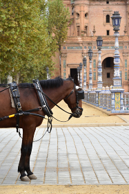 スペイン広場の馬車、セビリア、スペイン