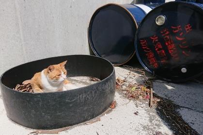 ドラム缶と猫、宮城県田代島