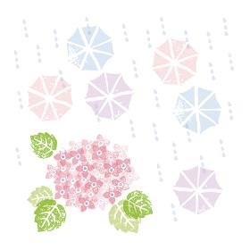 梅雨の季節、ピンクの紫陽花の花と傘