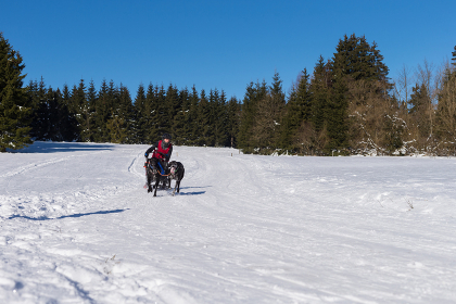 german championship sled sled women's forest 2015