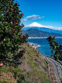 静岡県 椿の花に囲まれた隙間から見える富士山と薩埵峠の風景 12月