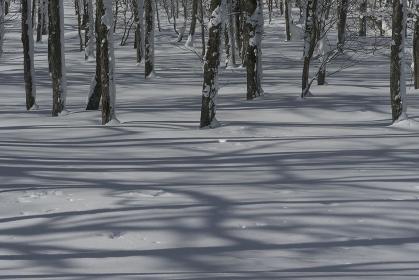雪原の上の縞模様な影
