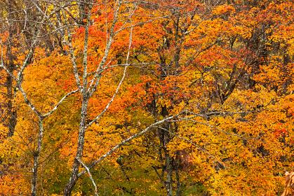 長野と山梨に跨がる八ヶ岳、秋の風景・日本