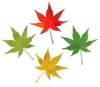 秋 もみじアイコン(水彩色鉛筆)