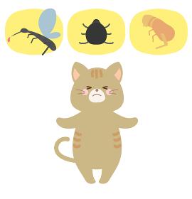 猫と蚊・差に・ノミのイラスト