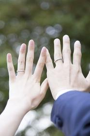 新郎新婦の手