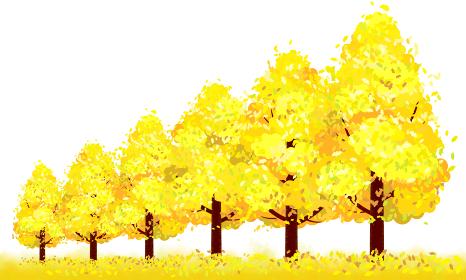 秋、色付いた銀杏並木