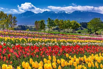 栃木県・那須町 春の那須連山と花畑の風景