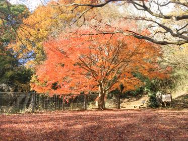 紅葉と落葉の絨毯
