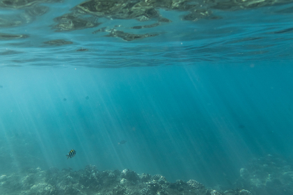 Fish swimming through light streaks under the sea in hawaii