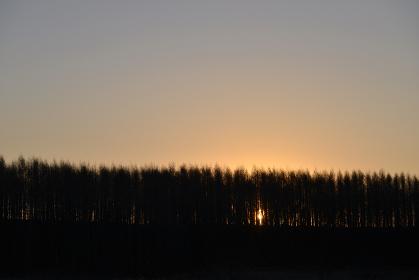 カラマツ林と朝日