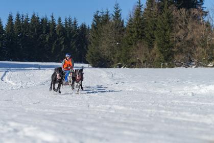 german championship sled dog race frauenwald 2015