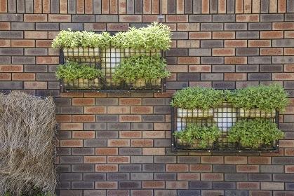 煉瓦壁面に飾られた植物