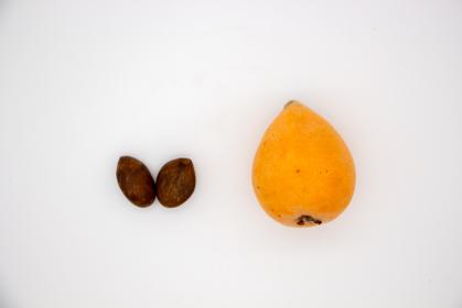 1粒のビワと2粒の種