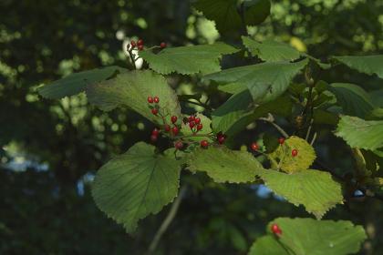 秋の公園で観察できる美しい植物(東京・2020年秋)