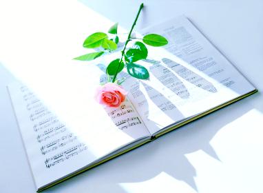 楽譜と一輪の薔薇