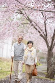 桜の中を散歩するシニア夫婦