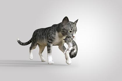 さばとら柄の母親猫が子猫の首を噛んで違う場所まで運んでいる