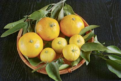 笊に入った緑の枝葉と黄色い蜜柑と柚子の果実