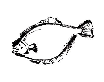 コピースペースのあるヒラメの手描き和風イラスト モノクロ