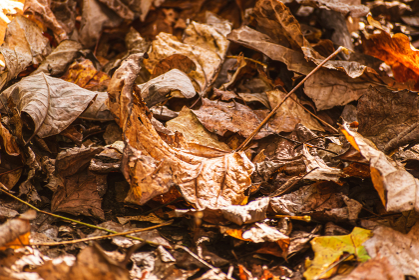 落葉の絨毯