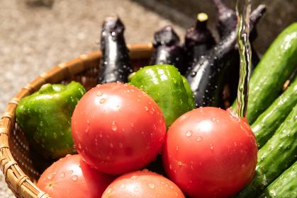 夏野菜 盛り合わせ