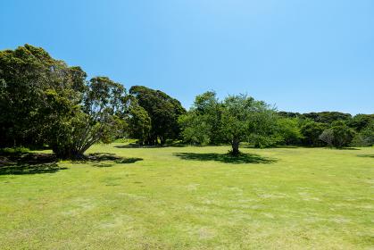 青空広がる初夏の公園 千葉県大房岬 5月